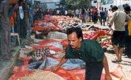 indonesia morti