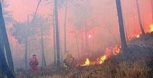 incendio bosco 2--400x300