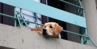 cane su balcone