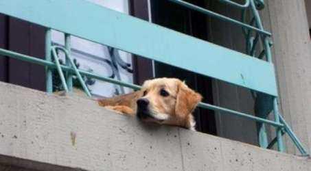 E tu lasceresti il cane chiuso sul balcone?