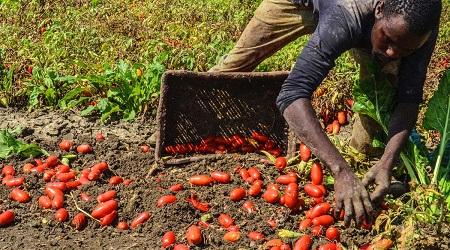 Protocollo per diritti lavoratori migranti San Ferdinando Sottoscritto in Prefettura. La soddisfazione della Cgil calabrese