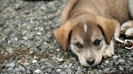 """Italia, 40.000 cani avvelenati dall'inizio dell'anno Aidaa: """"E' strage"""""""
