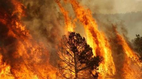 Gli incendi hanno tutti una matrice dolosa Ecco l'analisi del nostro Pino Romeo