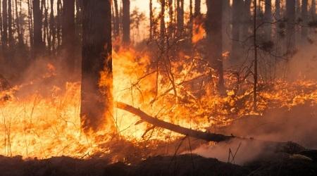 Incendi, ennesima giornata critica in Calabria Vigili del Fuoco, Calabria Verde e volontari impegnati per affrontare le emergenze