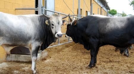 begehrte Auswahl an neue sorten neue Version Zootecnia, montagna e agricoltura sociale AgriSila | ApprodoNews