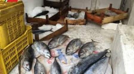 Sequestrati 210 kg di pesce in cattivo stato conservazione Denunciati due soggetti dalla Guardia di Finanza