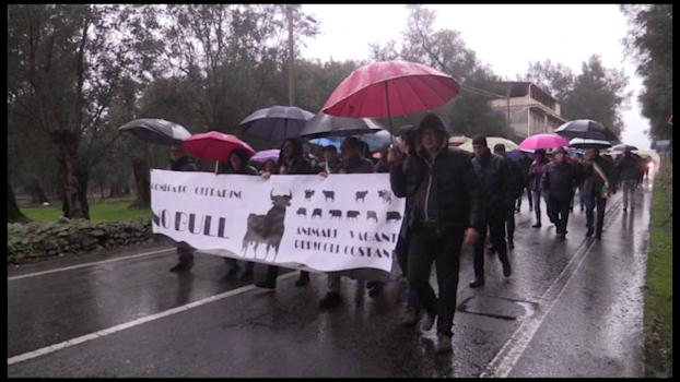 """Cittanova, il comitato """"No Bull"""" in marcia"""