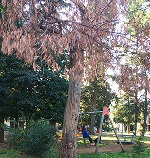 """Polistena, alberi pericolanti segnalati dal M5S II precario stato di salute di due esemplari arborei collocati presso Villa Italia e Villetta delle Papere ha destato le preoccupazioni per la pubblica incolumità del Meetup """"Libertà e Partecipazione"""""""