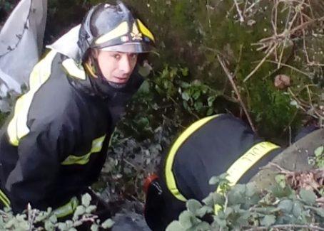I Vigili del fuoco salvano 2 cuccioli a Lamezia Terme Erano rimasti intrappolati in un canale