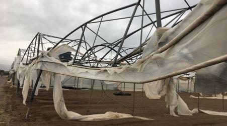 Vento nel lametino, danni a strutture serricole e colture Coldiretti chiede alla Regione il riconoscimento dello stato di calamità