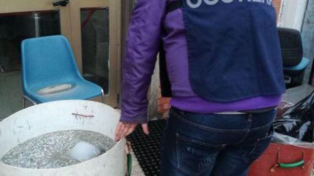 Sequestro 40 chili di pesce a ristorante Tonnara Palmi L'attività della Guardia Costiera di Gioia Tauro ha accertato inoltre il trasporto di 220 chilogrammi di bianchetto a Rosarno