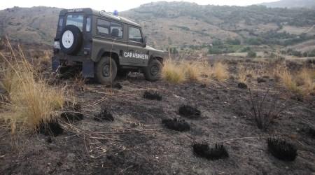 Provoca incendio Parco Aspromonte: deferito 45enne L'uomo è stato trovato in possesso dell'accendino usato per accendere le sterpaglie
