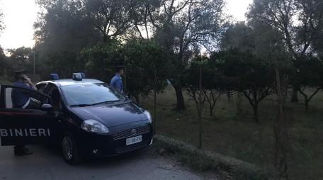 Sorpresi a rubare mandarini, 3 arresti a Cinquefrondi Si tratta di cittadini extracomunitari domiciliati nella vecchia tendopoli di San Ferdinando