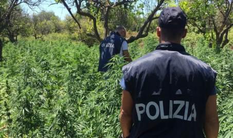 La Polizia arresta due pregiudicati di San Luca Per i reati di produzione, traffico e detenzione illecita di sostanze stupefacenti e furto