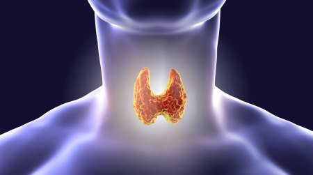 Tiroidite di Hashimoto: come intervenire con il cibo Il dottor Garritano si focalizza su una delle patologie autoimmuni più diffuse