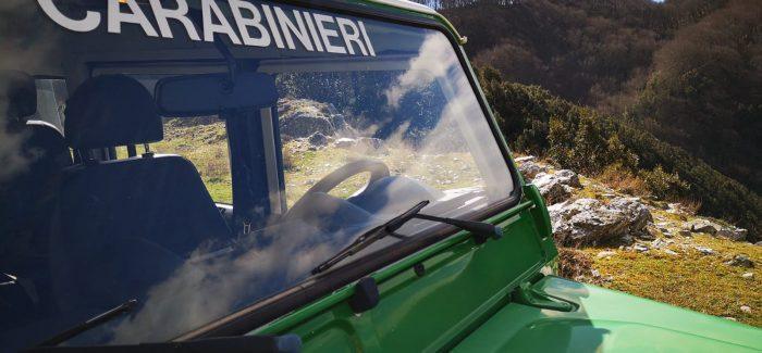 Molochio, due denunce da parte dei Carabinieri Sorpresi a tagliare la legna all'interno del Parco Nazionale D'Aspromonte