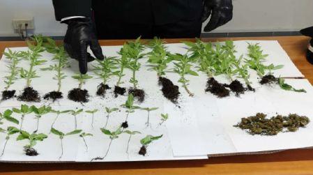 Piantagione illegale in capanno vicino casa: denunciato 64enne Un pluripregiudicato dovrà rispondere di coltivazione e detenzione di marijuana