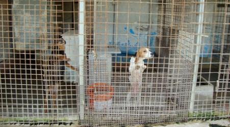 Carabinieri Forestale scoprono allevamento abusivo cani Denunciata una persona con l'accusa di maltrattamento di animali, violazioni edilizie e deturpamento di bellezze naturali