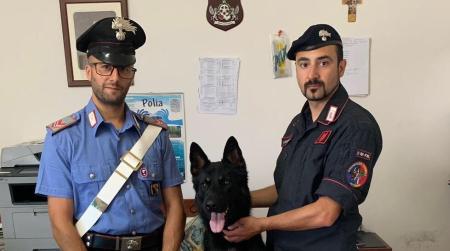 """""""Cane Carabiniere"""" trova munizioni durante controlli Deferito a piede libero un uomo di 42 anni"""