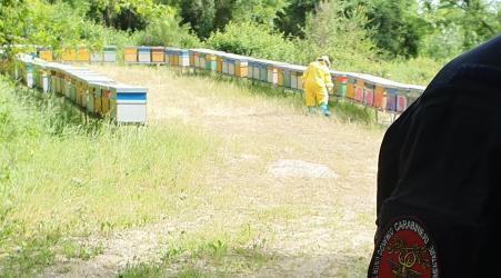 Controlli dei Carabinieri Forestali, sanzioni e denunce Attività volte al contrasto del fenomeno del nomadismo apiario ed alla prevenzione e repressione delle patologie delle api