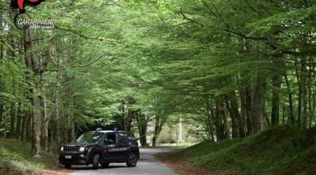 Pascolo abusivo e malgoverno di animali, deferiti tre allevatori Servizio dei Carabinieri della Compagnia di Taurianova e del Reparto Carabinieri forestali del Parco nazionale d'Aspromonte