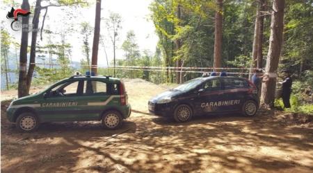 Taglio abusivo piante proprietà privata, ditta denunciata I Carabinieri hanno sequestrato un'area di circa 2000 mq