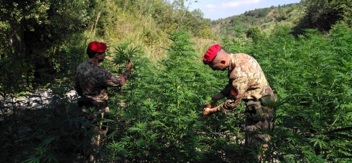 Scoperta piantagione di canapa, due arresti Lo stupefacente trovato, previo campionamento, è stato distrutto in loco dai Carabinieri su disposizione dell'Autorità Giudiziaria