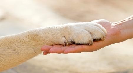 Possedere un cane fa bene al cuore ed allunga la vita È quanto emerge da uno studio europeo pubblicato sulla rivista medica Mayo Clinic Proceedings