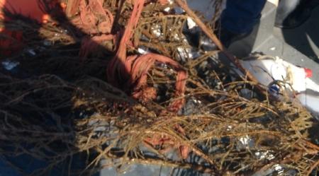 Lotta pesca abusiva, sequestro zattere galleggianti illegali Tutela delle risorse ittiche e del consumatore da parte della Guardia Costiera