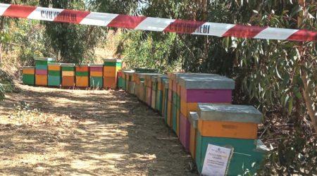 Arnie illegali e abusive, denunciato giovane apicoltore Il servizio veterinario dovrà eseguire accertamenti ulteriori per verificare la condizione sanitaria degli insetti