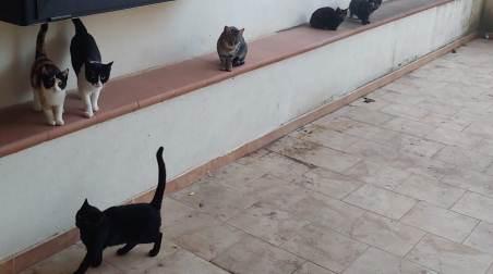 Gatti randagi murati vivi in un condominio, davano fastidio Accade a Rossano (CS), una animalista ha sentito i loro lamenti e ha prontamente allertato i Vigili del Fuoco