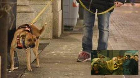 Coronavirus, ma anche a Taurianova i cani soffrono di prostata? Oltre ad un numero crescente di cani abbandonati che si vedono in giro. Perché?