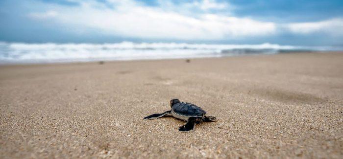 Le spiagge non sono tavoli da biliardo Il WWF rinnova l'appello per la tutela dei litorali